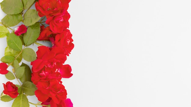 Bovenaanzicht ijsberg rozen met kopie-ruimte