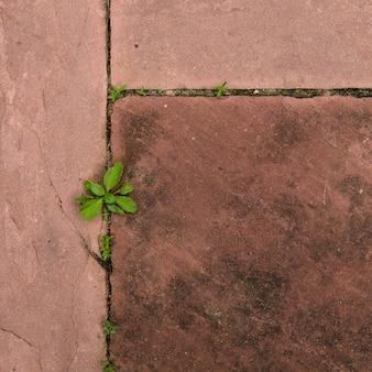 Bovenaanzicht jonge boom groei vorm zand stenen vloer