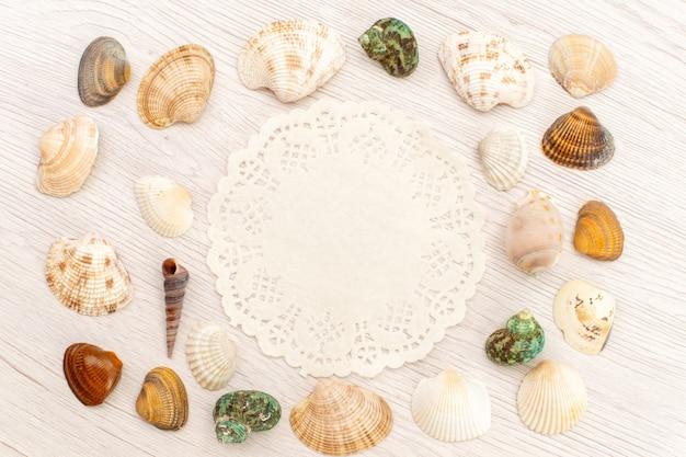 Bovenaanzicht kleine zeeschelpen verschillend gevormd en gekleurd op witte achtergrond zee oceaan zeewater shell