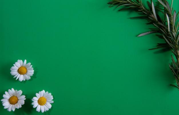 Bovenaanzicht kopie ruimte rozemarijn takken met kamilles op een groene achtergrond