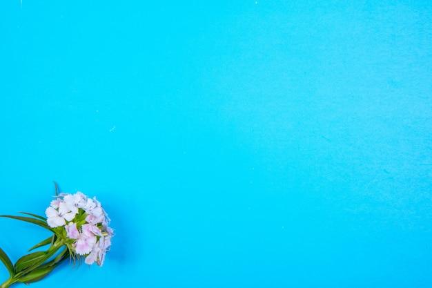 Bovenaanzicht kopie ruimte witte bloem op een blauwe achtergrond