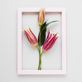 Bovenaanzicht leeg roze frame met bloeiende koninklijke lelies