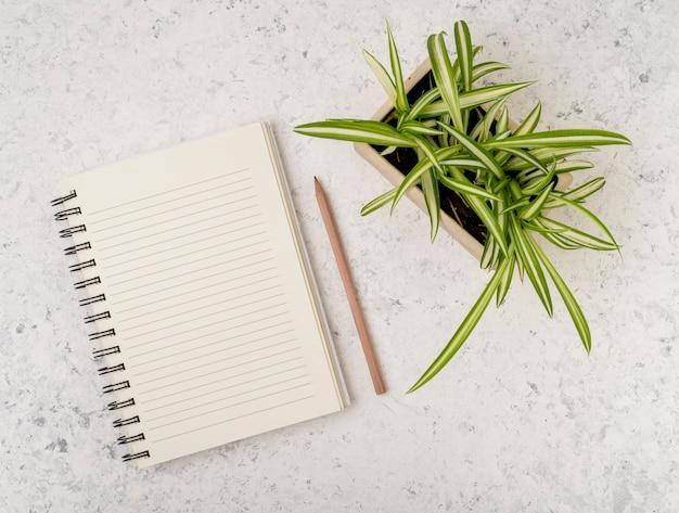 Bovenaanzicht levendige plant met kladblok