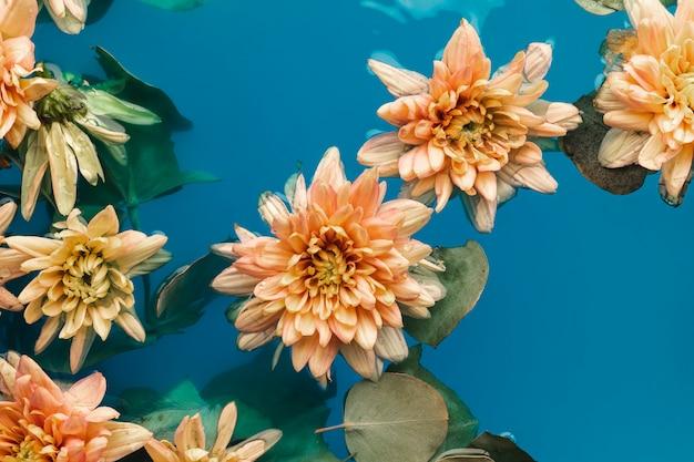 Bovenaanzicht licht oranje chrysanten in blauw water