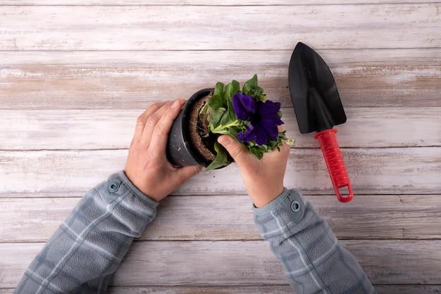 Bovenaanzicht man's handen planten plant in een pot op houten achtergrond