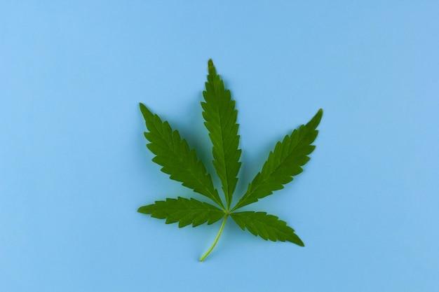 Bovenaanzicht marihuana blad op een lichte achtergrond