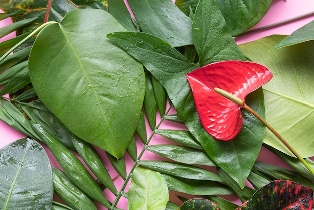 Bovenaanzicht minimale tropische plantensamenstelling