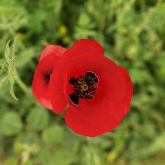 Bovenaanzicht mooie rode bloem