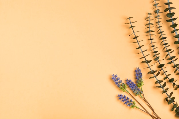 Bovenaanzicht natuurlijke lavendel op papier