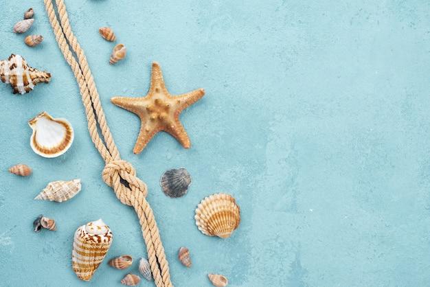 Bovenaanzicht nautische touw met schaaldieren