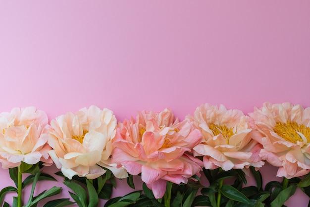 Bovenaanzicht op boeket pioenrozen, bloemen op roze achtergrond, plat gelegd, kopieer ruimte