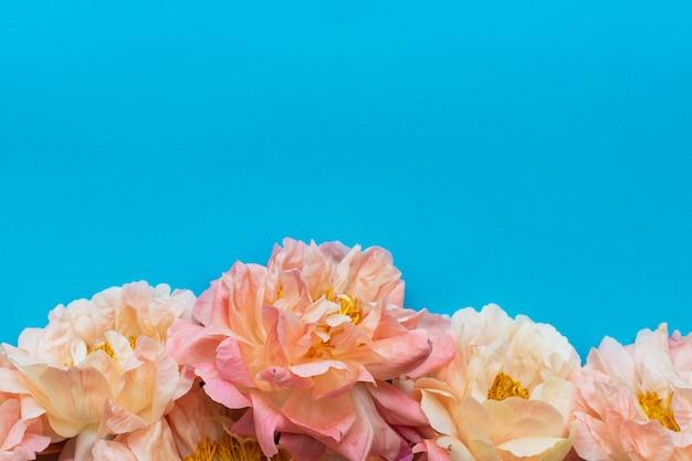 Bovenaanzicht op boeket van pioenrozen, bloemen op blauwe muur, plat leggen, kopie ruimte