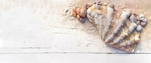 Bovenaanzicht op gigantische tweekleppige schelpdieren en andere kleine schelpen op het zand en een witte plank