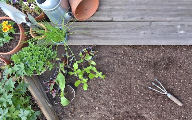 Bovenaanzicht op groentezaailingen en aromatische planten op de te planten grond in een tuin