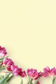 Bovenaanzicht op roze tulp bloemen die op een gele achtergrond liggen.