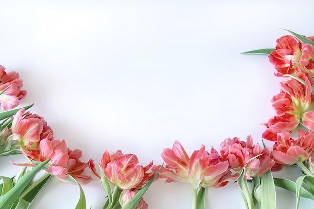 Bovenaanzicht op roze tulp bloemen die op een witte achtergrond liggen.
