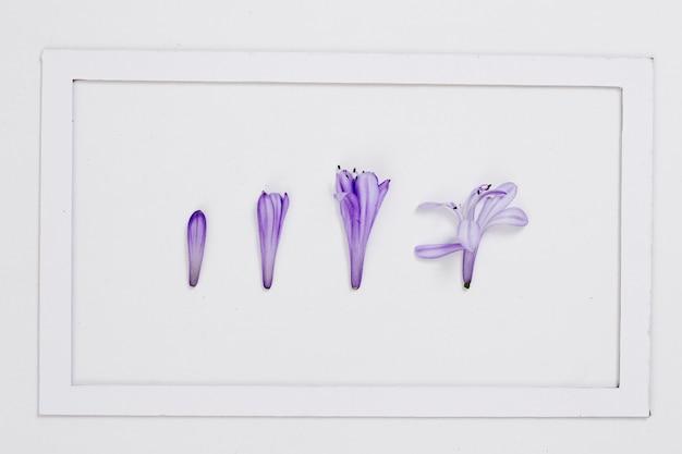 Bovenaanzicht paarse bloemblad lijn