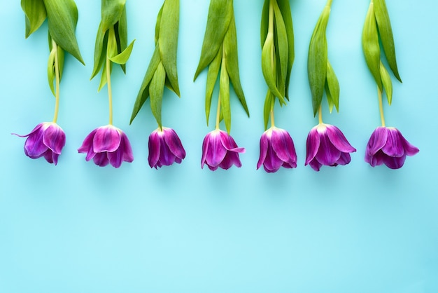 Bovenaanzicht paarse tulpen in rij op blauwe achtergrond, bloemstuk concept