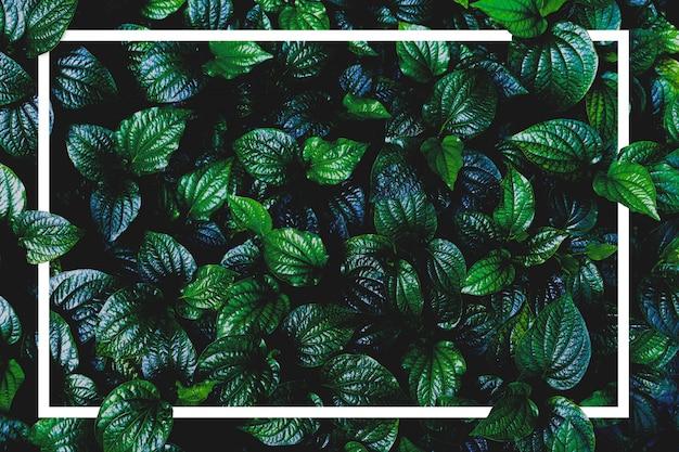 Bovenaanzicht plant en papier frame. groene bladinstallatie en kader met exemplaarruimte.