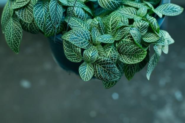 Bovenaanzicht plant in pot decoratie in een winkel