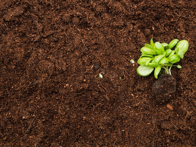 Bovenaanzicht plant op de bodem