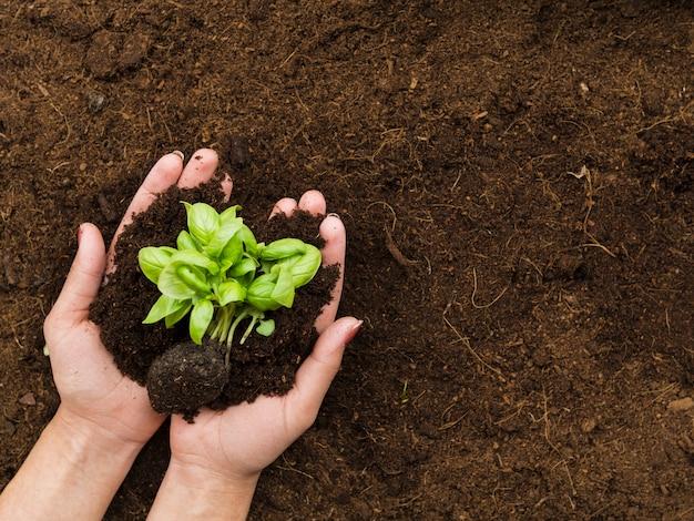 Bovenaanzicht plant vastgehouden door handen