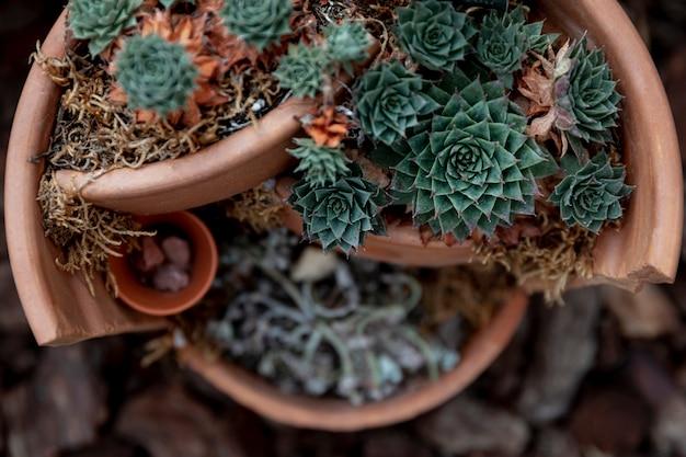 Bovenaanzicht regeling met bloemen in gebroken pot