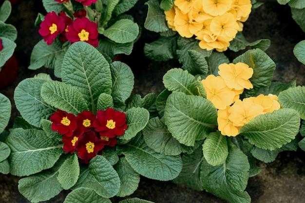 Bovenaanzicht regeling met rode en gele bloemen