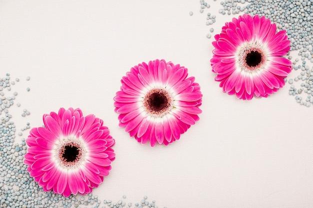 Bovenaanzicht regeling met roze madeliefjes