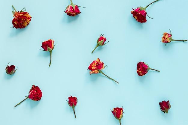 Bovenaanzicht regeling van bloemen op blauwe achtergrond