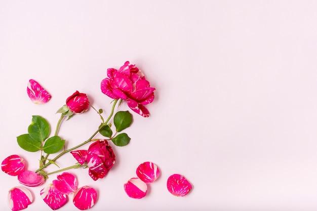 Bovenaanzicht rode roos met bloemblaadjes concept