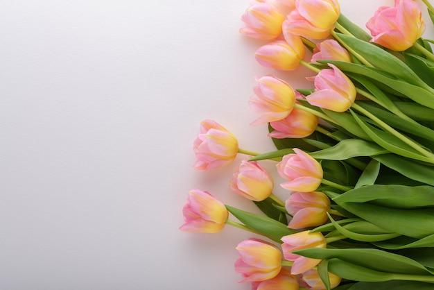 Bovenaanzicht roze tulpen met gele tint op witte achtergrond met kopie ruimte