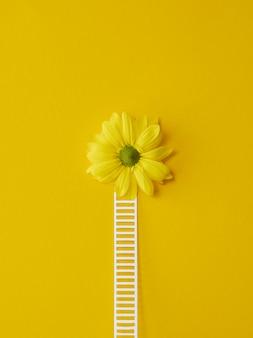 Bovenaanzicht samenstelling van optimisme concept met bloemen