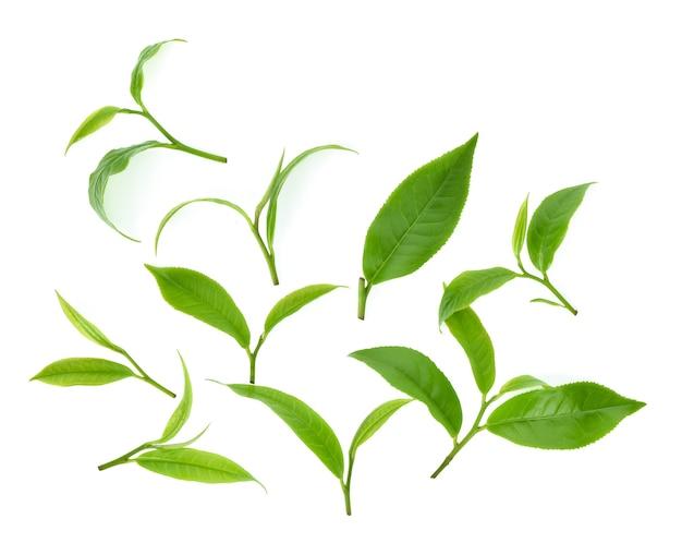 Bovenaanzicht set van groene thee blad geïsoleerd op een witte achtergrond