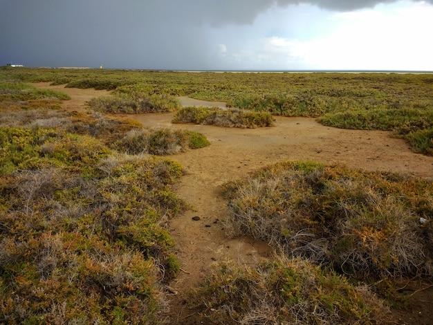 Bovenaanzicht shot van groene struiken in dryland in het natuurpark corralejo, spanje