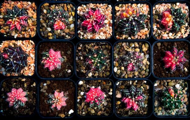 Bovenaanzicht stapel cactus in pot planten