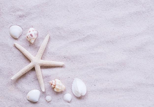 Bovenaanzicht, strand en schelp
