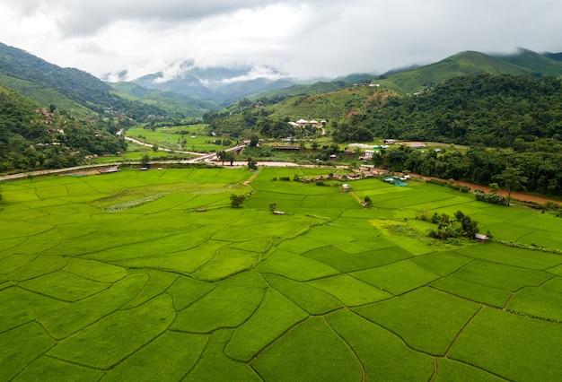 Bovenaanzicht terrasvormige rijstveld in chiangmai noord-thailand