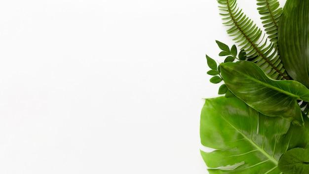 Bovenaanzicht van assortiment van bladeren met kopie ruimte