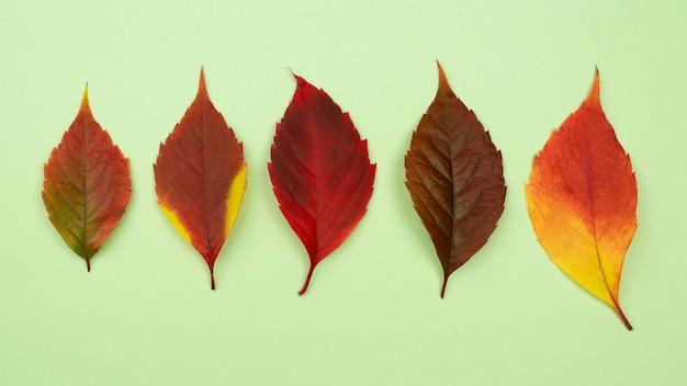 Bovenaanzicht van assortiment van gekleurde herfstbladeren