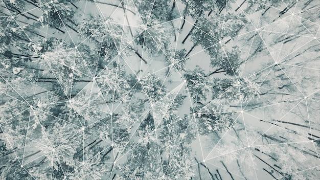 Bovenaanzicht van besneeuwde bossen met verbindingen