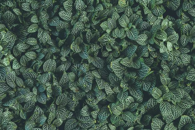 Bovenaanzicht van blad kleine plant in de tuin