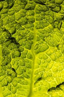 Bovenaanzicht van blad textuur