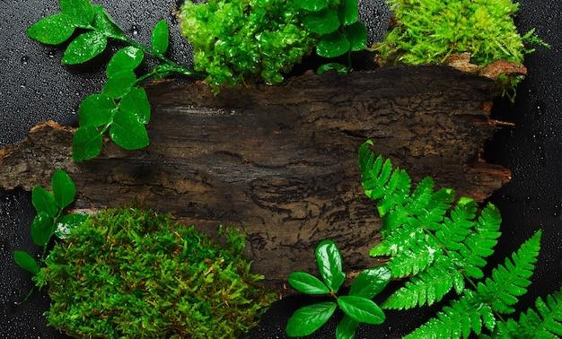 Bovenaanzicht van bladeren en vegetatie met boomschors