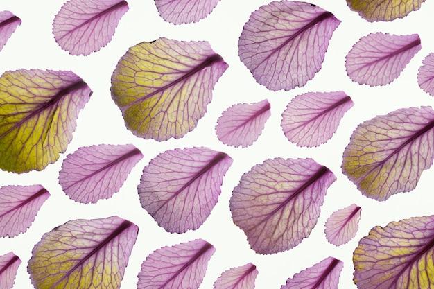 Bovenaanzicht van bladeren van de plant