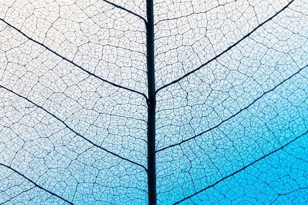 Bovenaanzicht van bladlamina textuur
