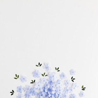 Bovenaanzicht van bloemen concept met kopie ruimte