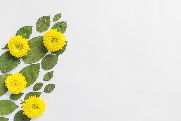 Bovenaanzicht van bloemen en bladeren
