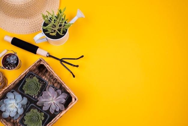 Bovenaanzicht van bloemen met kopie ruimte