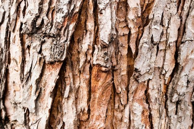 Bovenaanzicht van boomschors